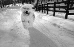 Ann-Lapp-dog