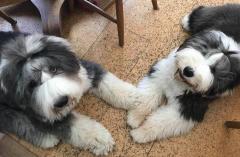 Rigby & Ellie