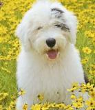 Lyric as a puppy.