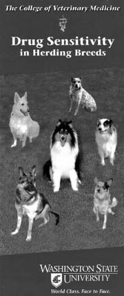 Drug sensitivity in herding breeds